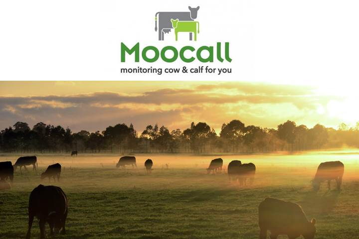Moocall - accurately predict when your cow is going to calf