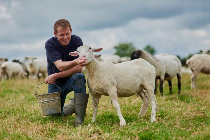 Learn how Anglia Quality Meats can help you with Livestock Analysis